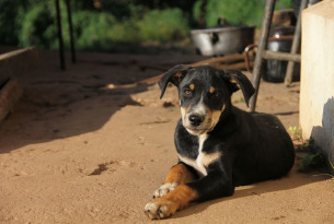 A dog we met during our disaster work after Cyclone Idai