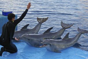 The case against marine mammals in captivity
