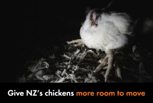 Give NZ's chickens more room to move