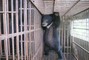 A bear cub on a farm in Vietnam - photo by our partners Education for Nature Vietnam