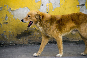 Mexico just proved that vaccinating dogs is how you end rabies