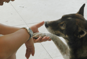 World Animal Protection team member Naritsorn Pholperm with a stray dog