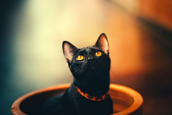 A black cat with yellow eyes sits in a terracotta port, head peeking out. It's wearing an orange collar decorated with black cat motifs.