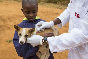 In August 2018 World Animal Protection was in Makueni County, Kenya to oversee a small rabies vaccination drive being carried out in the area. Credit Line: World Animal Protection