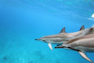 4 facts about dolphins that will blow your mind