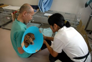 Remembering the animal survivors of Japan three years later