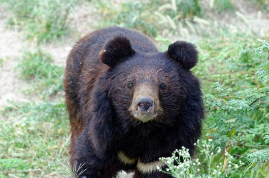 Milla, meaning gracious, has been a resident of Balkasar Sanctuary since 2011.