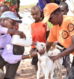 World Animal Protection - About Us - Our disasters team treating a goat in Kenya