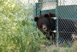 Taara and Lily saved from bear baiting