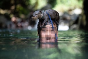 Otter on exotic pet owner's head in water - Wildlife. Not pets - World Animal Protection