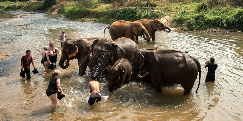 A group of tourists bathing in a shallow river wit elephants.