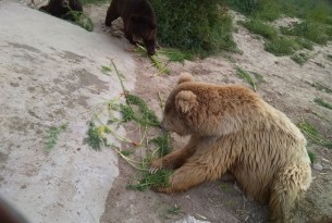 Organic farm grows carrots for Balkasar bears