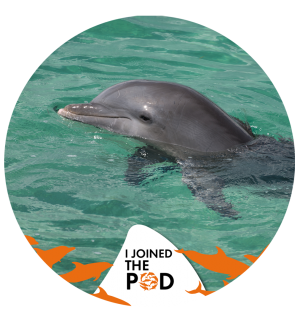 Join the Pod dolphin social media profile picture - World Animal Protection