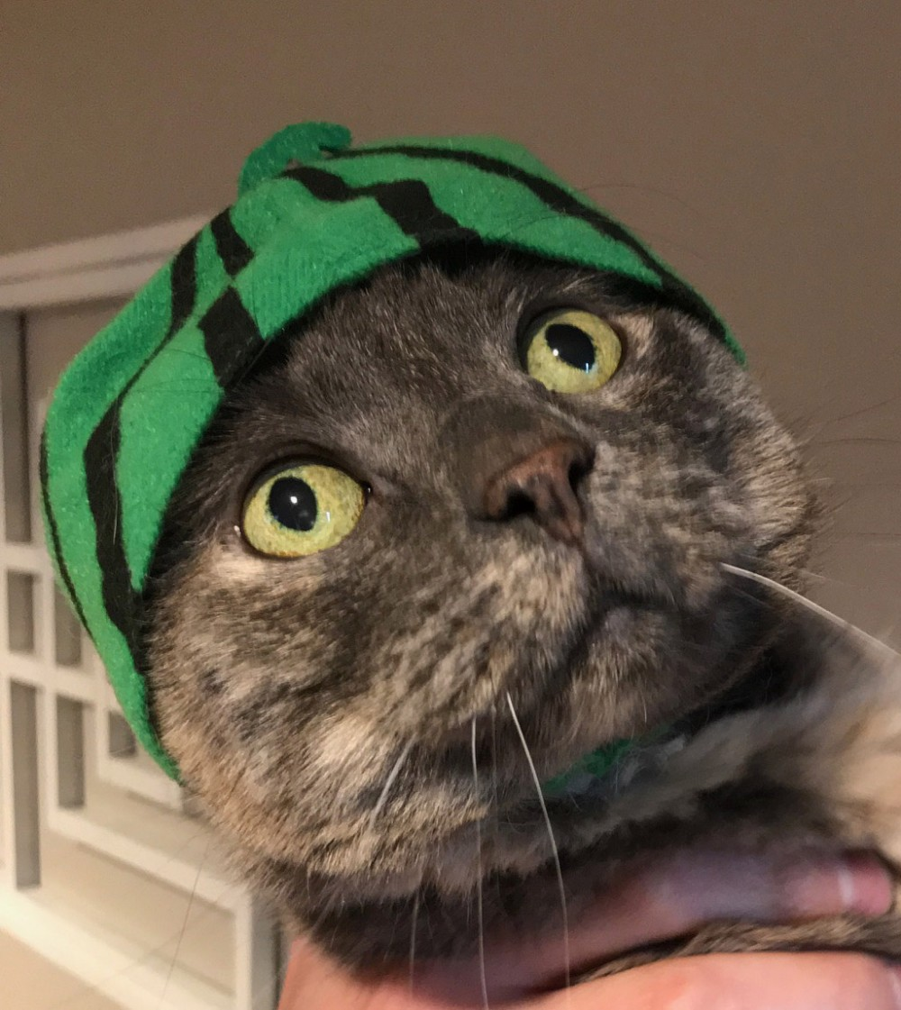 Beth's cat, Fat Kitty, wearing a watermelon hat