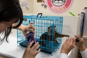 Cruel pet otter craze fuelled by Japanese otter cafes and social media