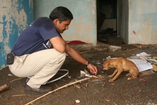 Our director of disasters feeds a dog in Jamaica after Hurricane Dean - World Animal Protection - Disaster response