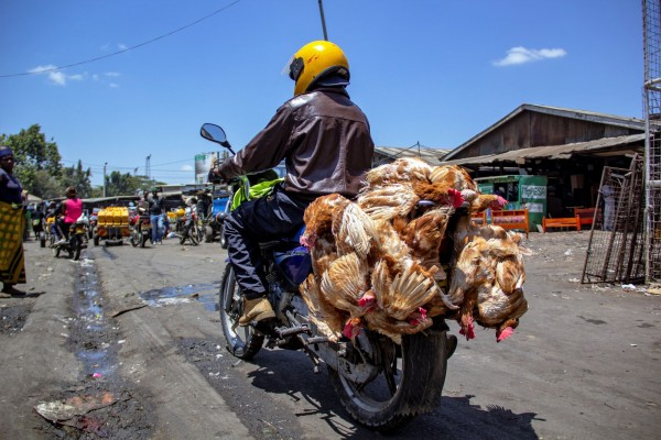 Chicken being transported inhumanely in Kenya