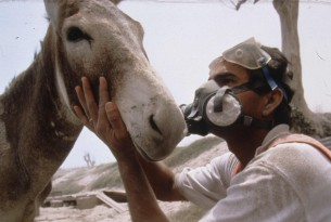 A vet in a facemask checks a donkey following a disaster