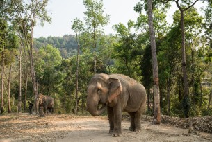 Admiring wildlife from afar: Thai venue pioneers elephant-friendly transition