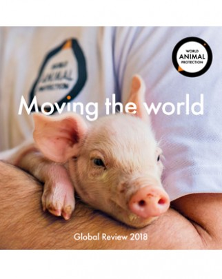 Download our Global Review 2018