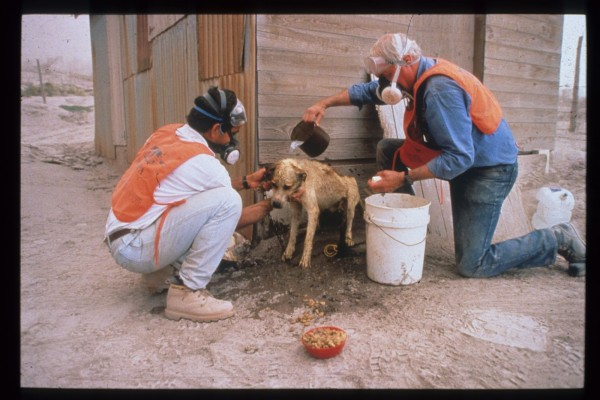 Celebrating 55 years protecting animals in disasters