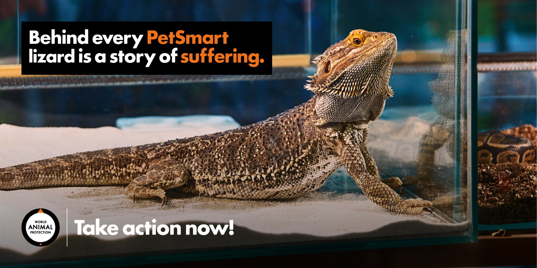 Lizards are suffering. PetSmart must act!