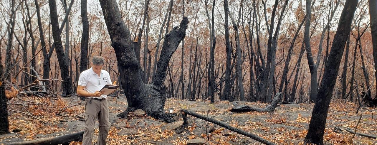 Langetermijnherstel na bosbranden Australië