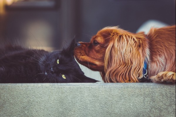 Cat and dog - World Animal Protection