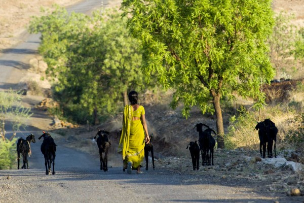 Woman walking down a road with goats
