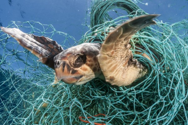 The deadliest catch: world's biggest seafood companies can do more to address lost fishing gear - Sea Change - World Animal Protection
