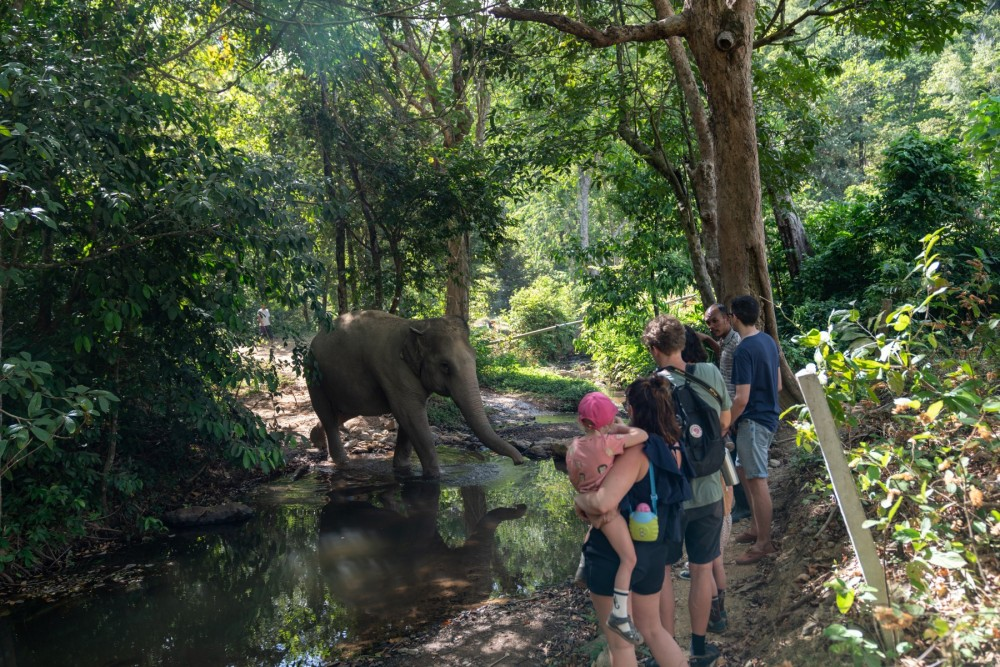 Guests observing elephant resident Jahn at Following Giants in Thailand.