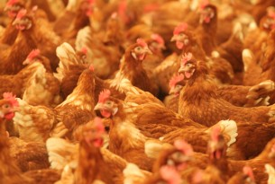 We applaud Panera Bread's commitment to transition US egg supply to cage-free eggs by 2020