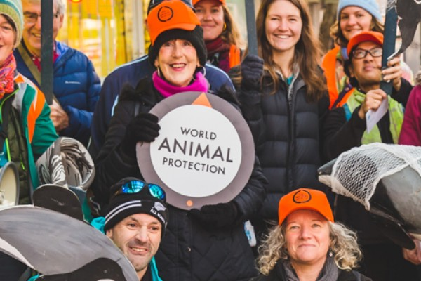 World Animal Protection Māui and Hector's dolphin's submission being delivered in Wellington, New Zealand