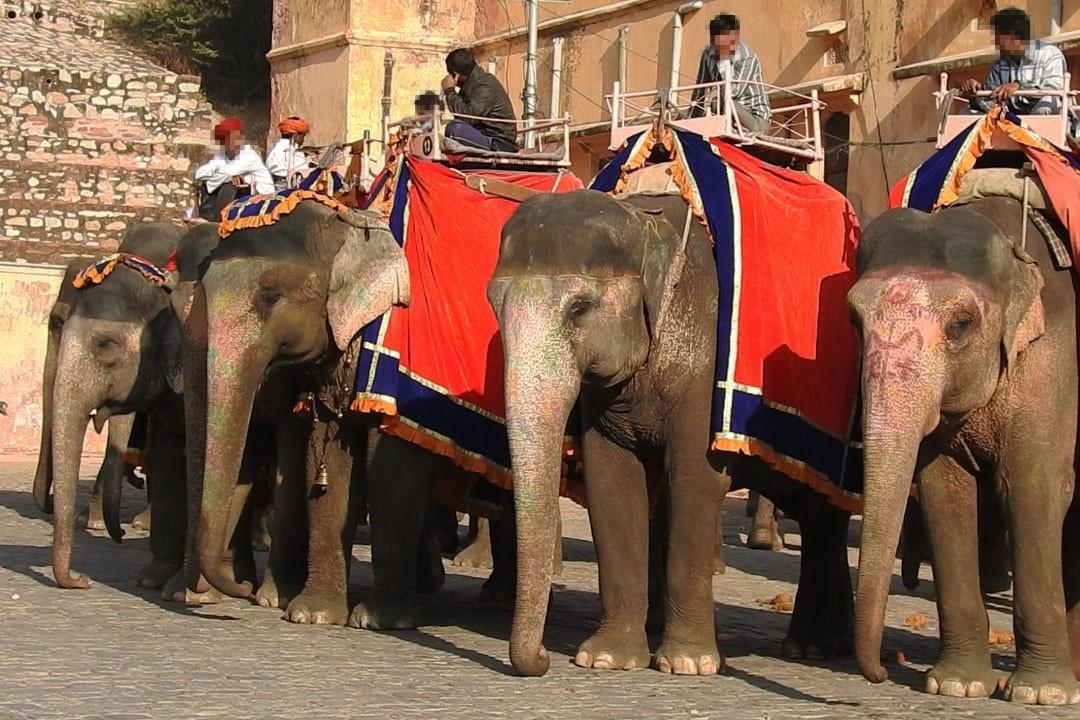 Elefantridning vid Amer Fort