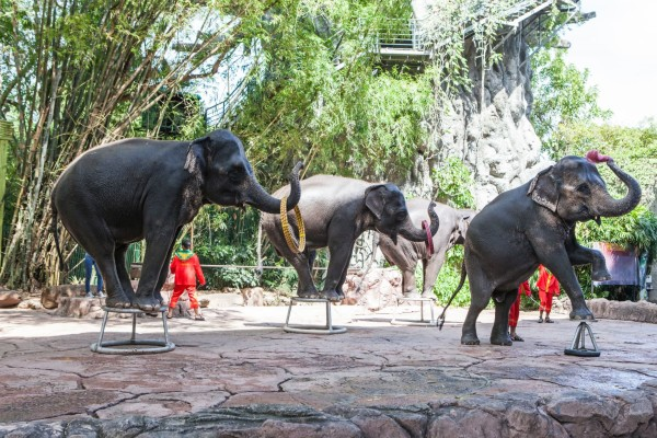 Elephants giving a performance in front of a large crowd of tourists at a wildlife venue in Thailand