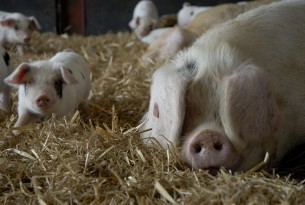 7 reasons why lab-grown meat will be better