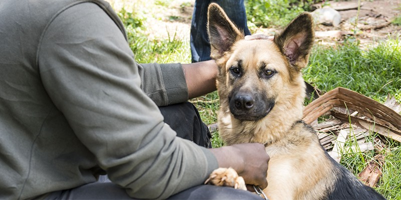 A German Shepherd-type dog sits with one paw on their owner's knee. The person is petting the dog, with their hand behind the dog's ear