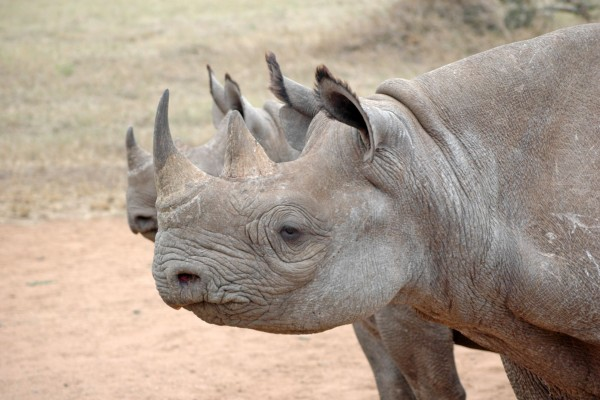 White Rhino Bags x World Animal Protection - Corporate Partnership
