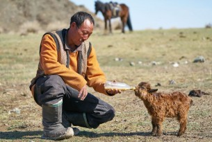 Mongolia's Dzud: Steppes to recovery