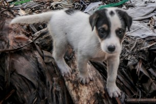 puppy in disaster