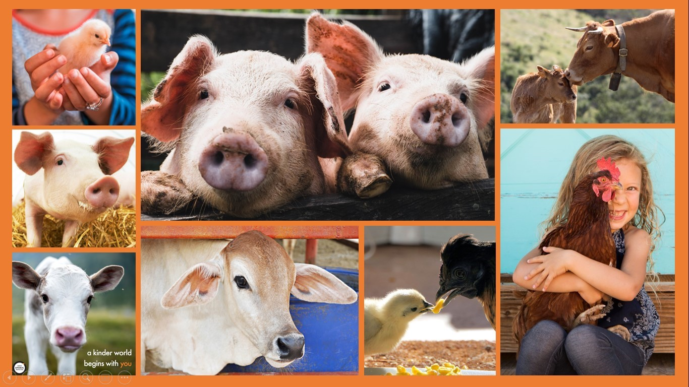 world day for farmed animals collage
