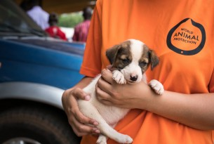 A small puppy is held by a World Animal Protection vet