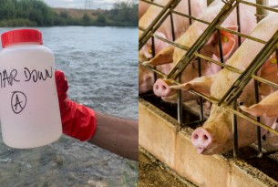 Water testing bottle and pigs on a factory farm - World Animal Protection