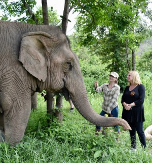 Danish TV presenter Loretta Shrijver stands near an elephant at the Boon Lott's Elephant Sanctuary in Thailand
