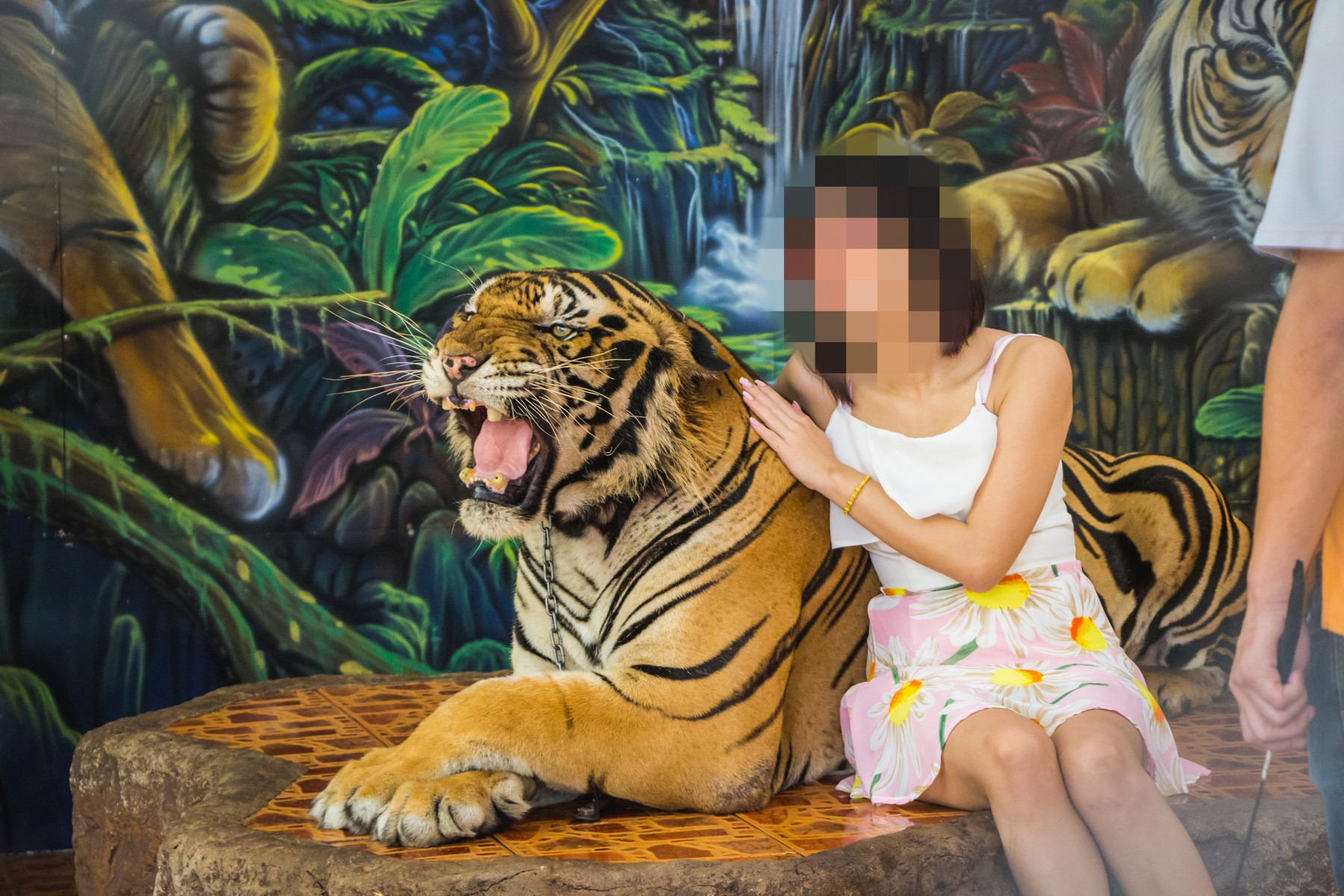 Tigerpark i Thailand, hvor turister kan f? taget billeder med tigrene