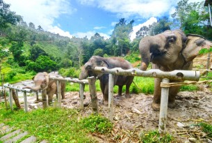 Elephants eating at ChangChill