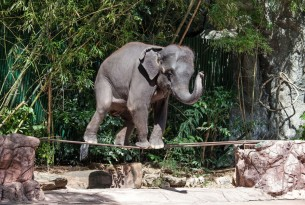 The Myth of the Domesticated Elephant