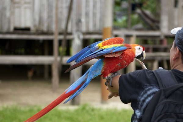 A bird being held by a tourist for a photo opportunity.