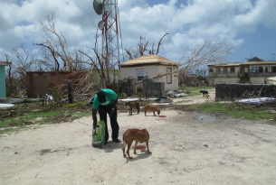 Veterinary doctor feeds a dog in Barbuda