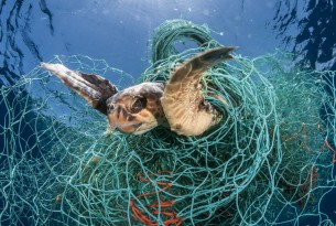 Ghosts beneath the waves - fish tangled in ghost gear - Sea Change - World Animal Protection